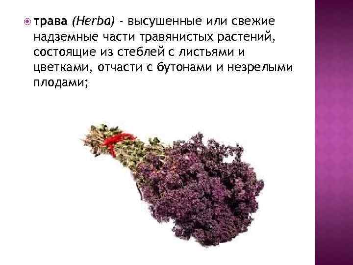 трава (Herba) - высушенные или свежие надземные части травянистых растений, состоящие из стеблей