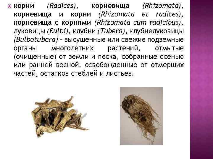 корни (Radices), корневища (Rhizomata), корневища и корни (Rhizomata et radices), корневища с корнями