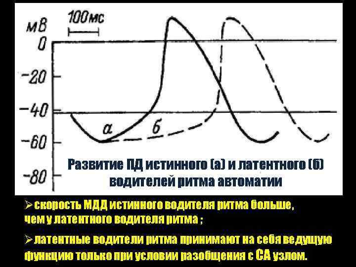 Развитие ПД истинного (а) и латентного (б) водителей ритма автоматии Øcкорость МДД истинного водителя