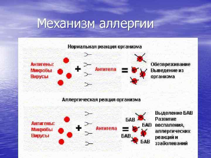 Механизм аллергии