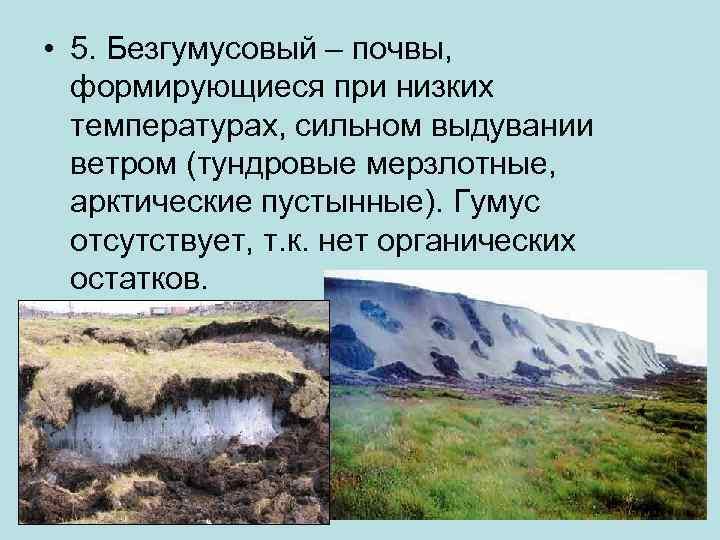 • 5. Безгумусовый – почвы, формирующиеся при низких температурах, сильном выдувании ветром (тундровые