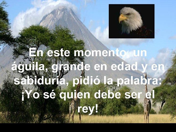 En este momento, un águila, grande en edad y en sabiduría, pidió la palabra: