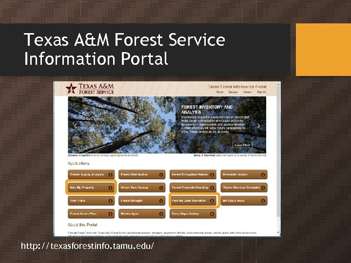 Texas A&M Forest Service Information Portal http: //texasforestinfo. tamu. edu/
