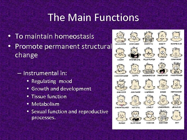 The Main Functions • To maintain homeostasis • Promote permanent structural change – Instrumental