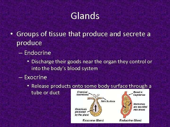 Glands • Groups of tissue that produce and secrete a produce – Endocrine •