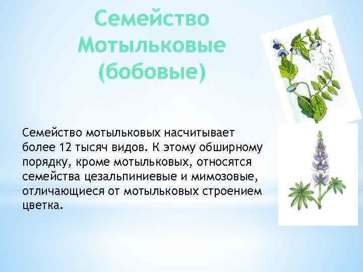 Семейство Мотыльковые (бобовые) Семейство мотыльковых насчитывает более 12 тысяч видов. К этому обширному порядку,