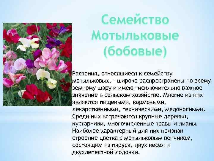Растения, относящиеся к семейству мотыльковых, – широко распространены по всему земному шару и имеют