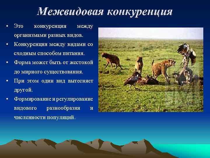 Межвидовая конкуренция • Это конкуренция между организмами разных видов. • Конкуренция между видами со