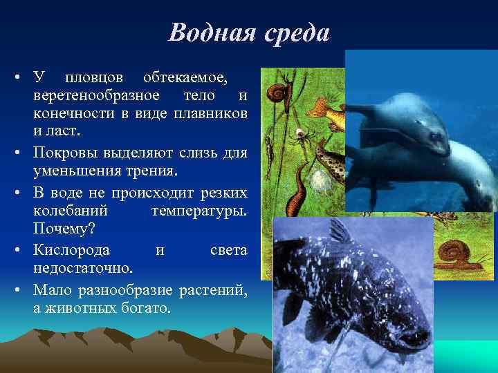 Водная среда • У пловцов обтекаемое, веретенообразное тело и конечности в виде плавников и