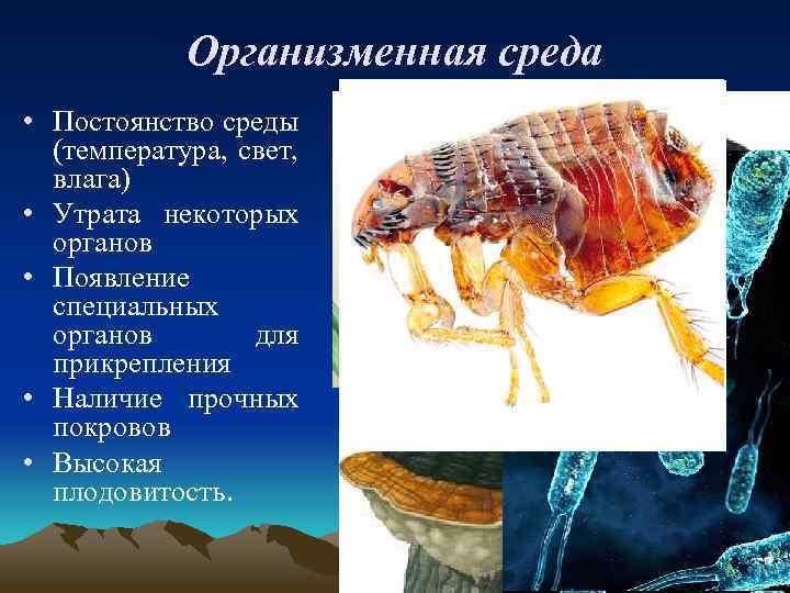 Организменная среда • Постоянство среды (температура, свет, влага) • Утрата некоторых органов • Появление