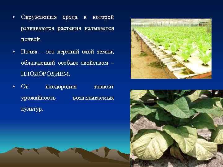 • Окружающая среда в которой развиваются растения называется почвой. • Почва – это