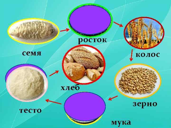 росток семя колос хлеб зерно тесто мука