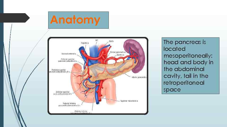 Pancreas Natomy Physiology Functions Violation Of Functions