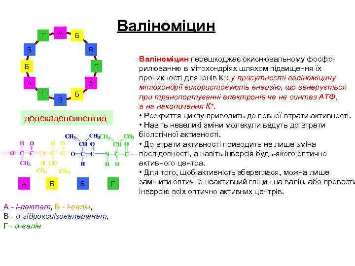 А Г Валіноміцин Б В В Б Г А А Г В Б додекадепсипептид