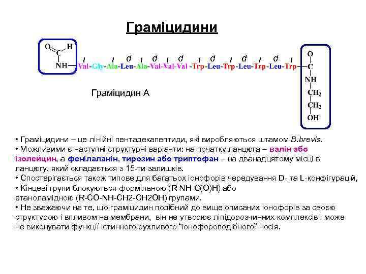 Граміцидини l l d l d l d l Граміцидин А • Граміцидини –