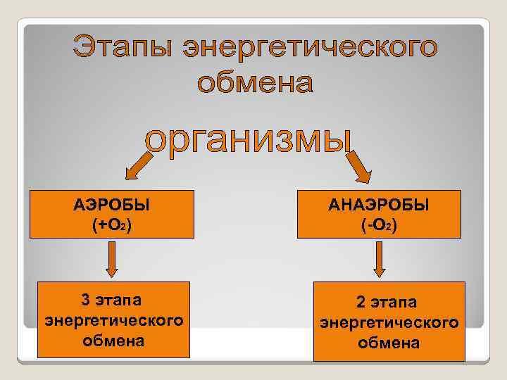 АЭРОБЫ (+О 2) 3 этапа энергетического обмена АНАЭРОБЫ (-О 2) 2 этапа энергетического обмена