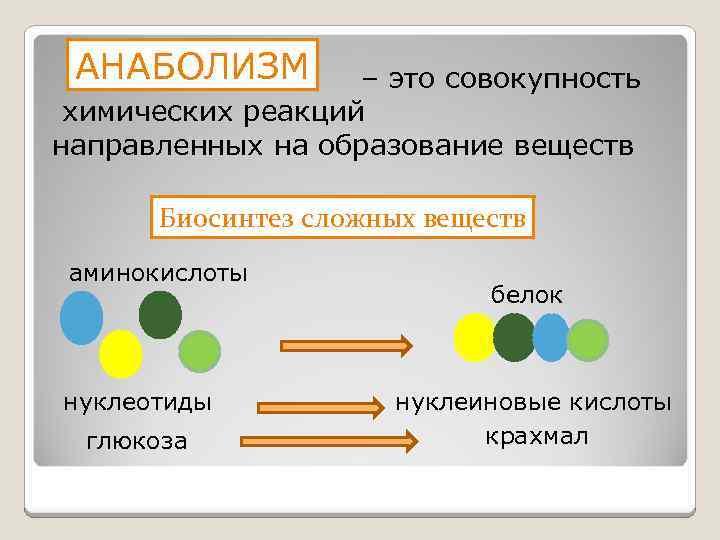 АНАБОЛИЗМ – это совокупность химических реакций направленных на образование веществ Биосинтез сложных веществ аминокислоты