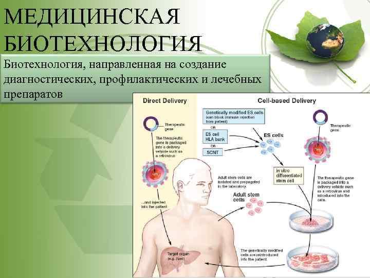 МЕДИЦИНСКАЯ БИОТЕХНОЛОГИЯ Биотехнология, направленная на создание диагностических, профилактических и лечебных препаратов
