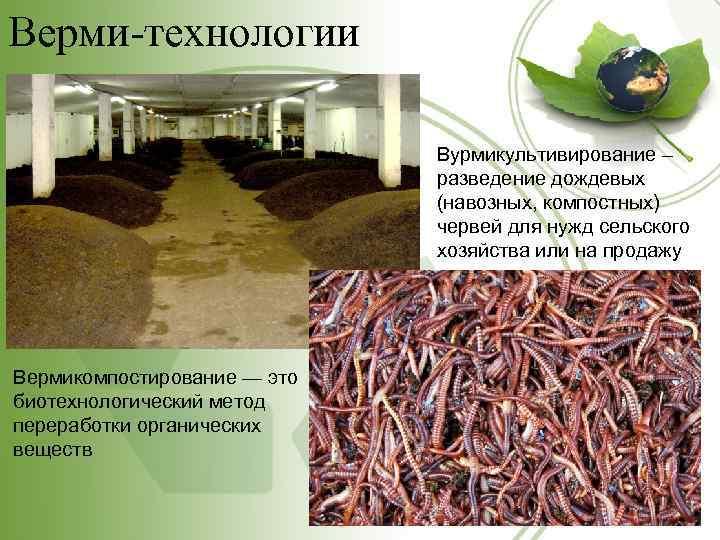 Верми-технологии Вурмикультивирование – разведение дождевых (навозных, компостных) червей для нужд сельского хозяйства или на