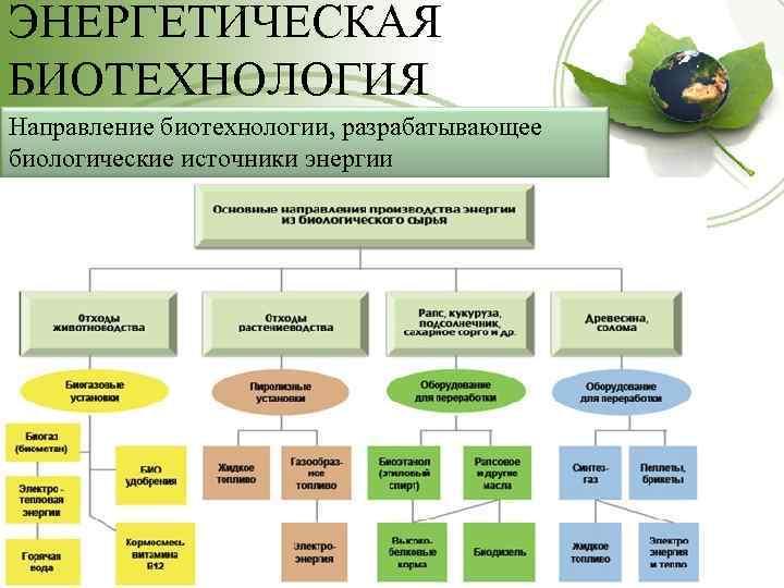 ЭНЕРГЕТИЧЕСКАЯ БИОТЕХНОЛОГИЯ Направление биотехнологии, разрабатывающее биологические источники энергии