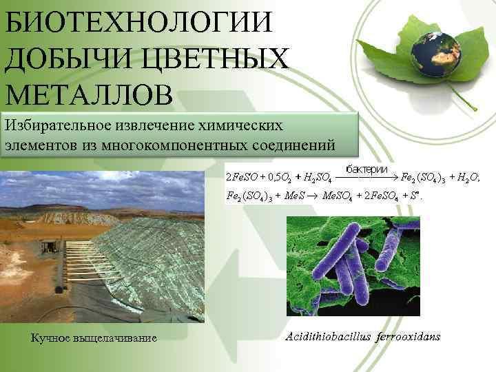 БИОТЕХНОЛОГИИ ДОБЫЧИ ЦВЕТНЫХ МЕТАЛЛОВ Избирательное извлечение химических элементов из многокомпонентных соединений Кучное выщелачивание Acidithiobacillus