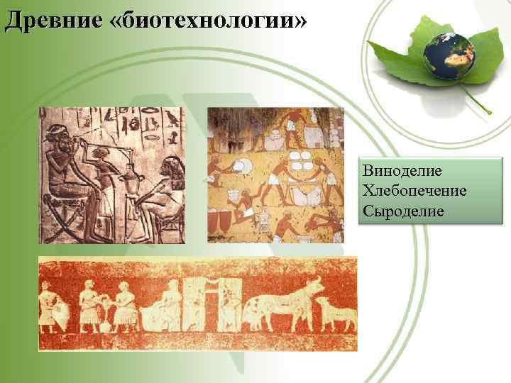 Древние «биотехнологии» Виноделие Хлебопечение Сыроделие