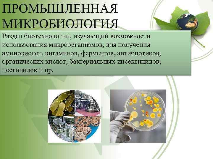 ПРОМЫШЛЕННАЯ МИКРОБИОЛОГИЯ Раздел биотехнологии, изучающий возможности использования микроорганизмов, для получения аминокислот, витаминов, ферментов, антибиотиков,