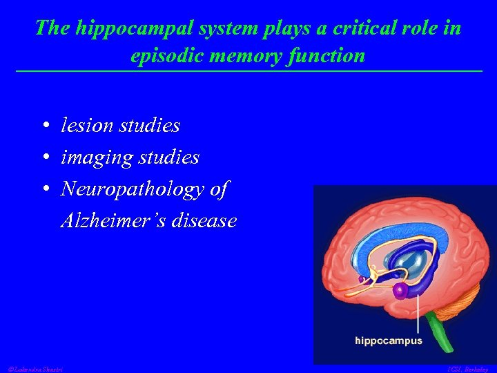 The hippocampal system plays a critical role in episodic memory function • lesion studies