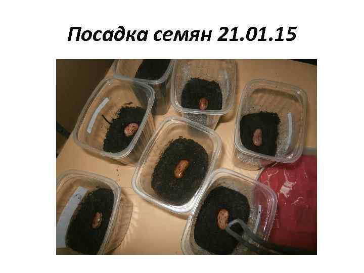 Посадка семян 21. 01. 15