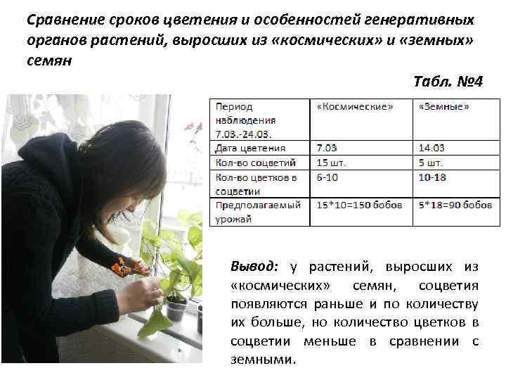 Сравнение сроков цветения и особенностей генеративных органов растений, выросших из «космических» и «земных» семян