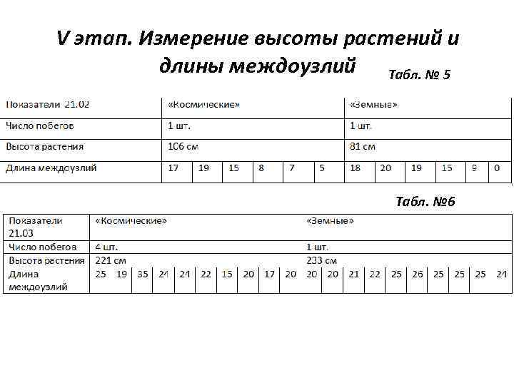 V этап. Измерение высоты растений и длины междоузлий Табл. № 5 Табл. № 6