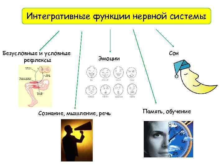 Интегративные функции нервной системы Безусловные и условные рефлексы Эмоции Сознание, мышление, речь Сон Память,