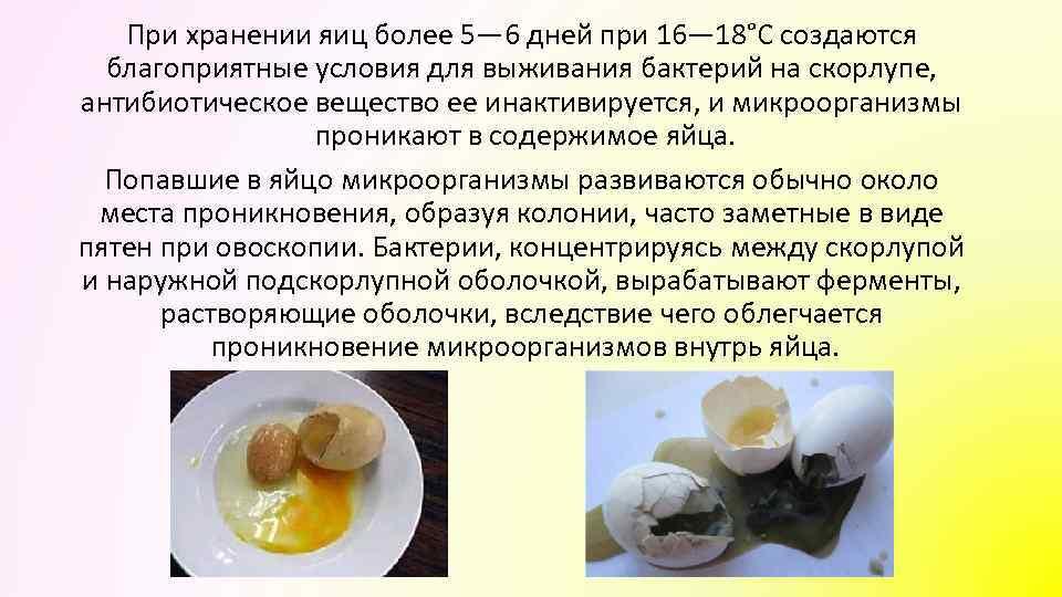 При хранении яиц более 5— 6 дней при 16— 18°С создаются благоприятные условия для