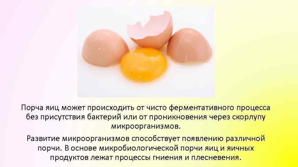 Порча яиц может происходить от чисто ферментативного процесса без присутствия бактерий или от проникновения