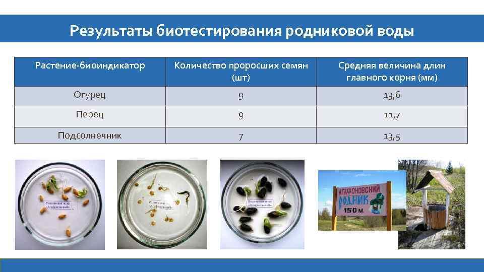 Результаты биотестирования родниковой воды Растение-биоиндикатор Количество проросших семян (шт) Средняя величина длин главного корня