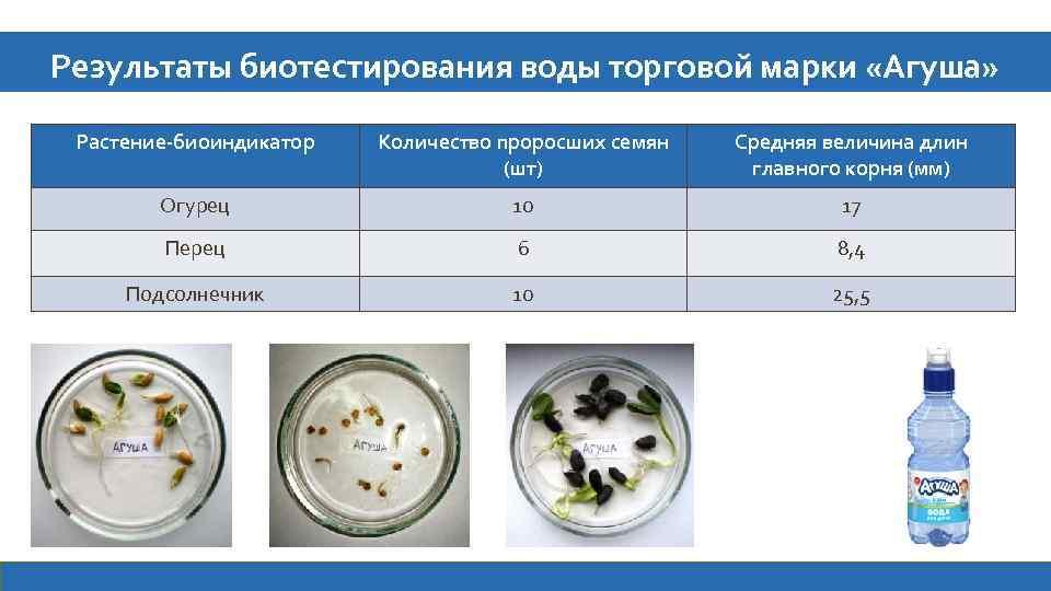 Результаты биотестирования воды торговой марки «Агуша» Растение-биоиндикатор Количество проросших семян (шт) Средняя величина длин