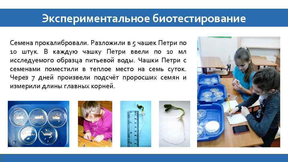 Экспериментальное биотестирование Семена прокалибровали. Разложили в 5 чашек Петри по 10 штук. В каждую