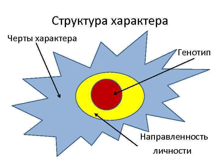 Структура характера Черты характера Генотип Направленность личности