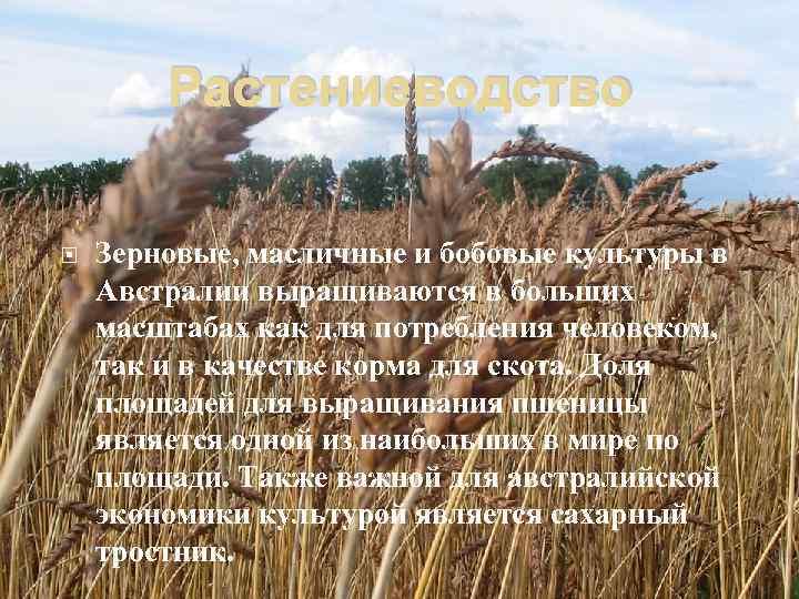 Растениеводство Зерновые, масличные и бобовые культуры в Австралии выращиваются в больших масштабах как для
