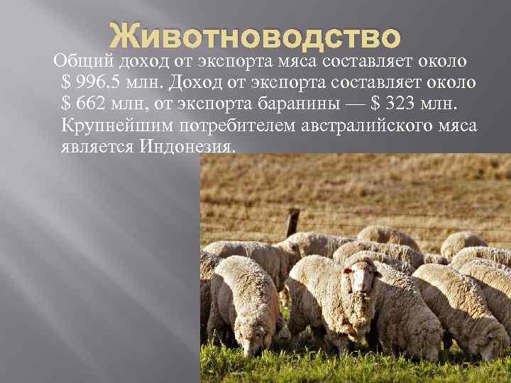 Животноводство Общий доход от экспорта мяса составляет около $ 996. 5 млн. Доход от
