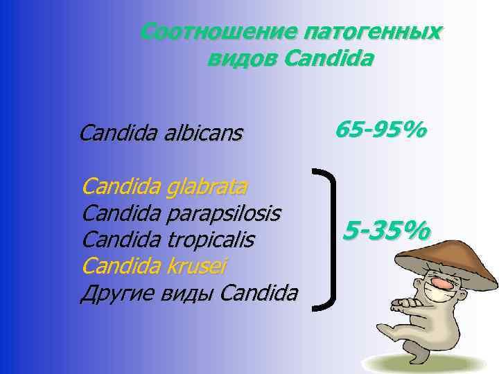 Соотношение патогенных видов Candida albicans Candida glabrata Candida parapsilosis Candida tropicalis Candida krusei Другие