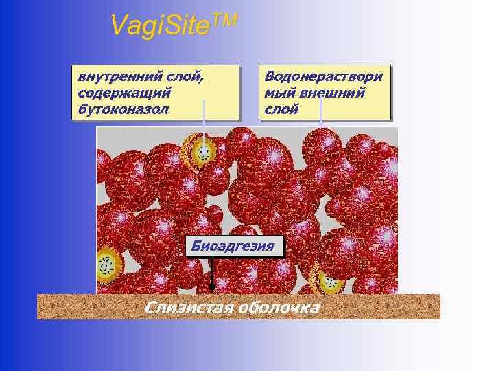 Vagi. Site. TM внутренний слой, содержащий бутоконазол Водонераствори мый внешний слой Биоадгезия Слизистая оболочка