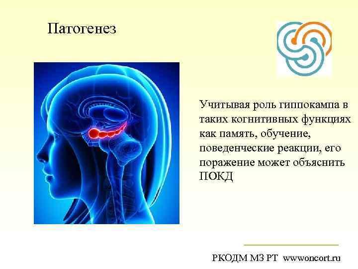 Патогенез Учитывая роль гиппокампа в таких когнитивных функциях как память, обучение, поведенческие реакции, его