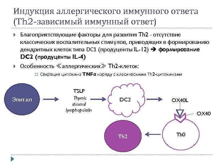 Индукция аллергического иммунного ответа (Th 2 -зависимый иммунный ответ) Благоприятствующие факторы для развития Th