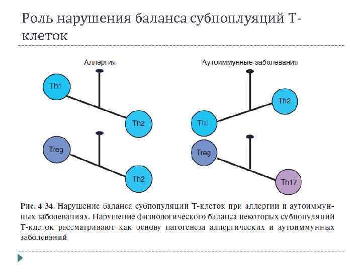 Роль нарушения баланса субпоплуяций Тклеток