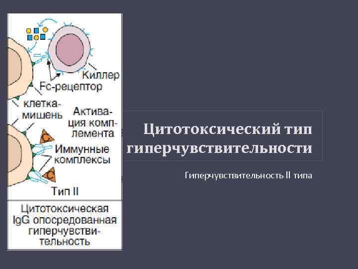 Цитотоксический тип гиперчувствительности Гиперчувствительность II типа