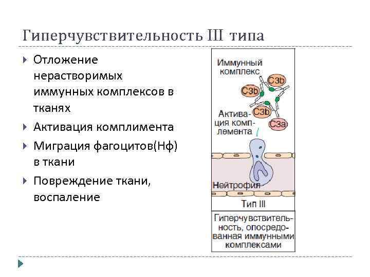 Гиперчувствительность III типа Отложение нерастворимых иммунных комплексов в тканях Активация комплимента Миграция фагоцитов(Нф) в