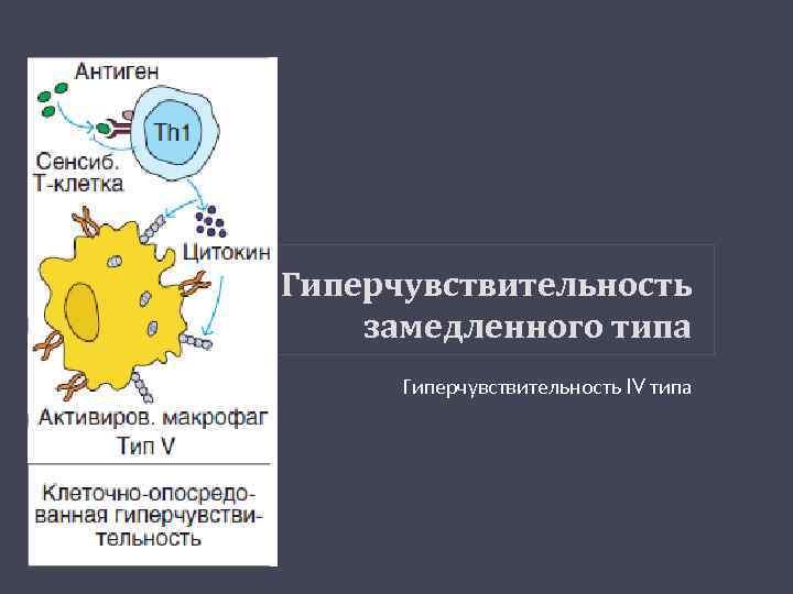 Гиперчувствительность замедленного типа Гиперчувствительность IV типа