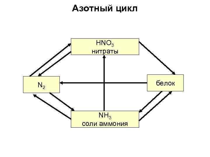 Азотный цикл HNO 3 нитраты белок N 2 NH 3 соли аммония