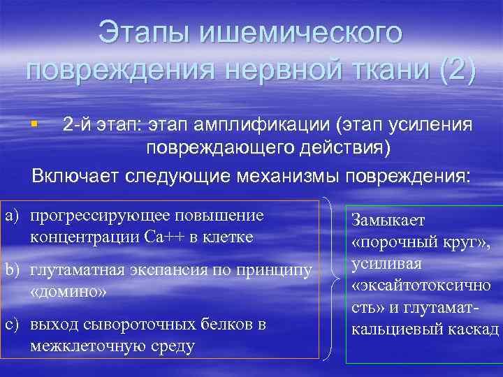 Этапы ишемического повреждения нервной ткани (2) § 2 -й этап: этап амплификации (этап усиления